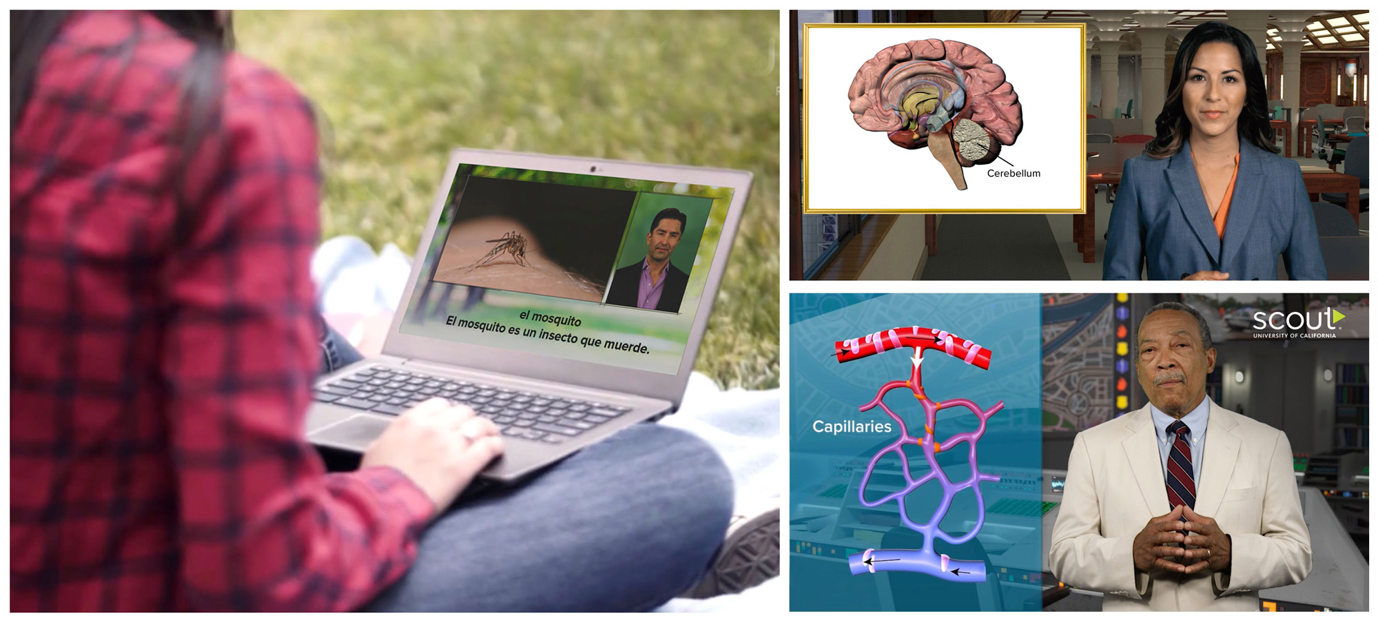 viewing video on a laptop, discussing the cerebellum, capillaries diagram, Scout - University of California broadcast