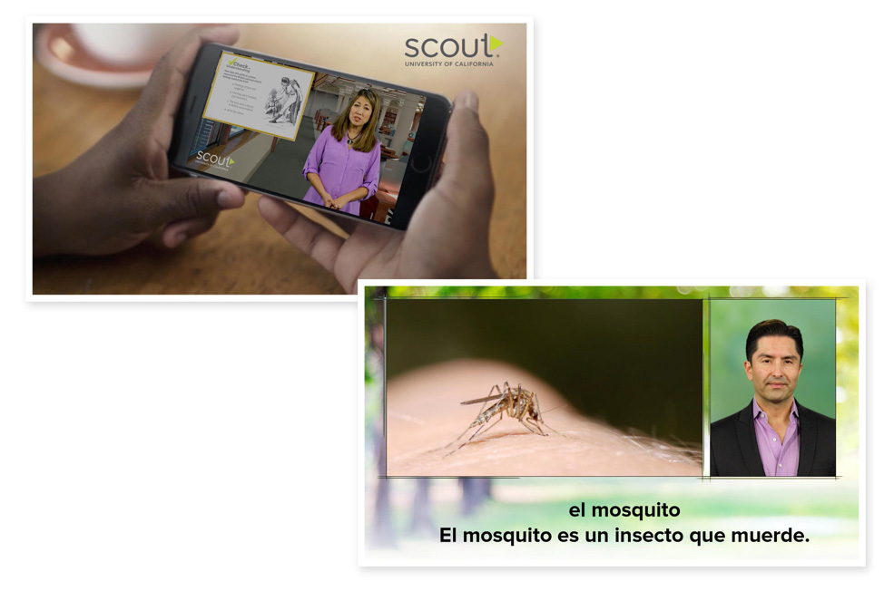watching a Scout video on a phone, Scout video about mosquitos in Spanish