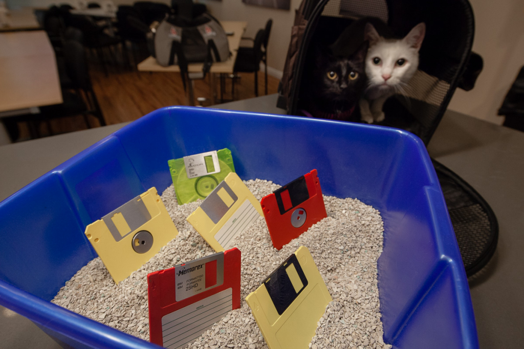 Catbox with floppy disks standing up in the litter